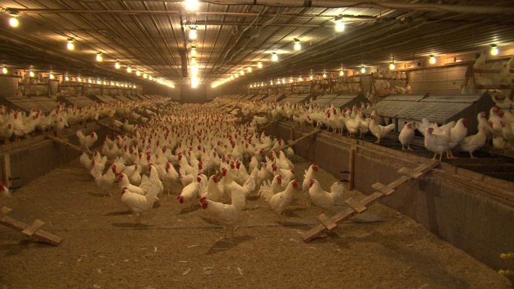 Cox Bros  Poultry Farm | Nova Scotia Federation of Agriculture